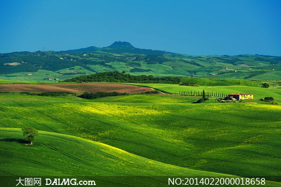 绿色草原自然美景摄影图片素材 大图网设计素