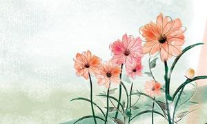 手绘花卉植物插画设计PSD分层素材