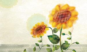 手绘风格的向日葵花卉PSD分层素材