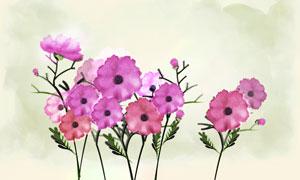 紫色花植物与水彩背景PSD分层素材