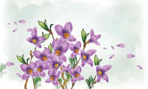 紫色小花植物與花瓣等PSD分層素材