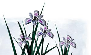 手繪花植物與墨染背景PSD分層素材