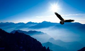 在山顶飞翔的雄鹰摄影图片