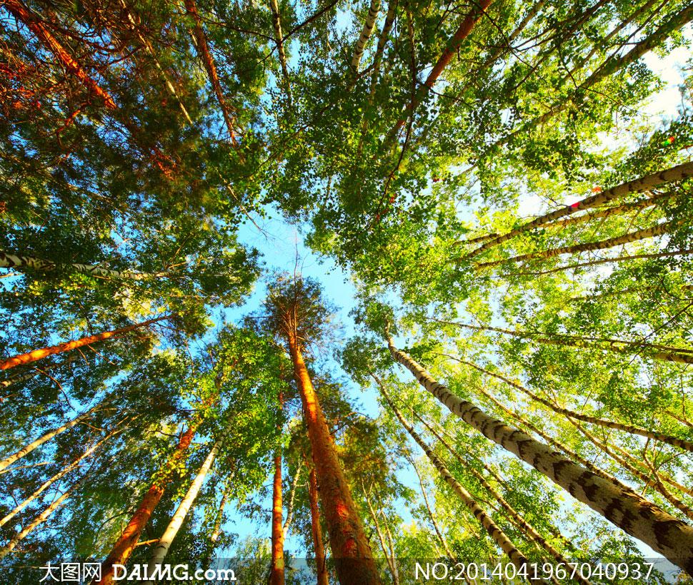 大图图片素材风景风光蓝天天空白云云彩云层多云树木大树树叶叶子自然