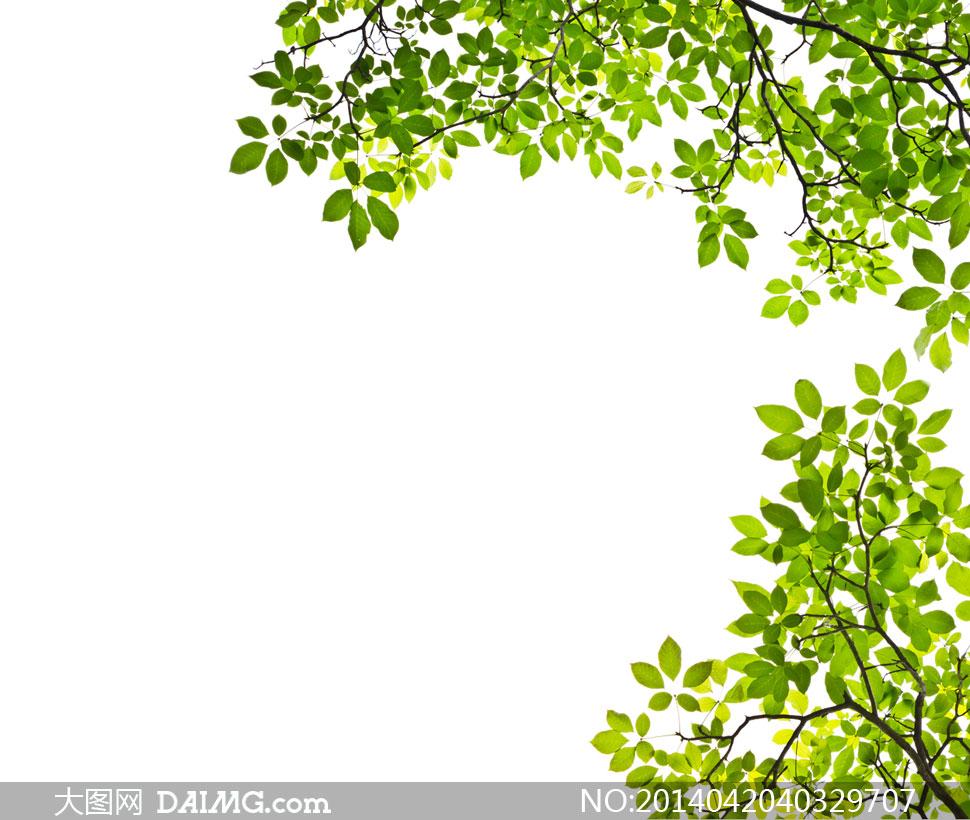 关键词: 高清摄影大图图片素材自然风景风光树叶树木叶子绿叶叶子树枝