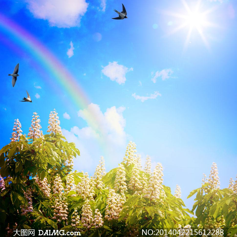 蓝天白云彩虹阳光植物摄影高清图片