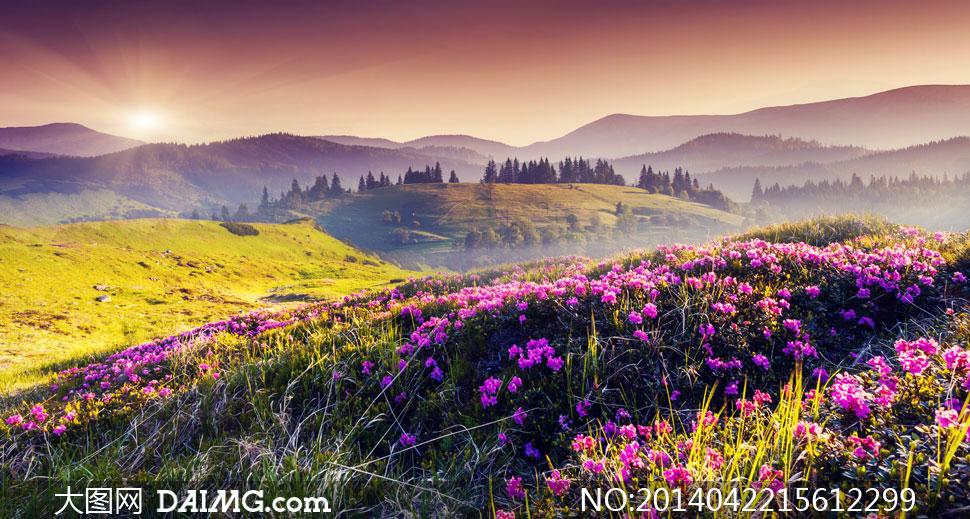 大图首页 高清图片 自然风景 > 素材信息          参天大树风景仰拍图片