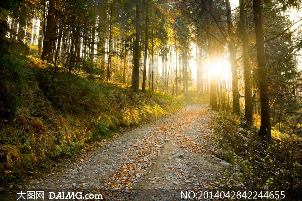 林间小路自然风景逆光摄影高清图片