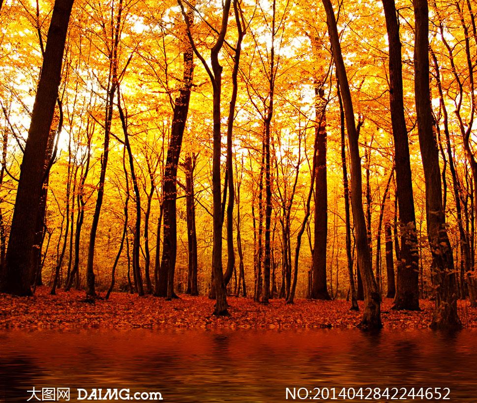秋天水边树林自然风景摄影高清图片