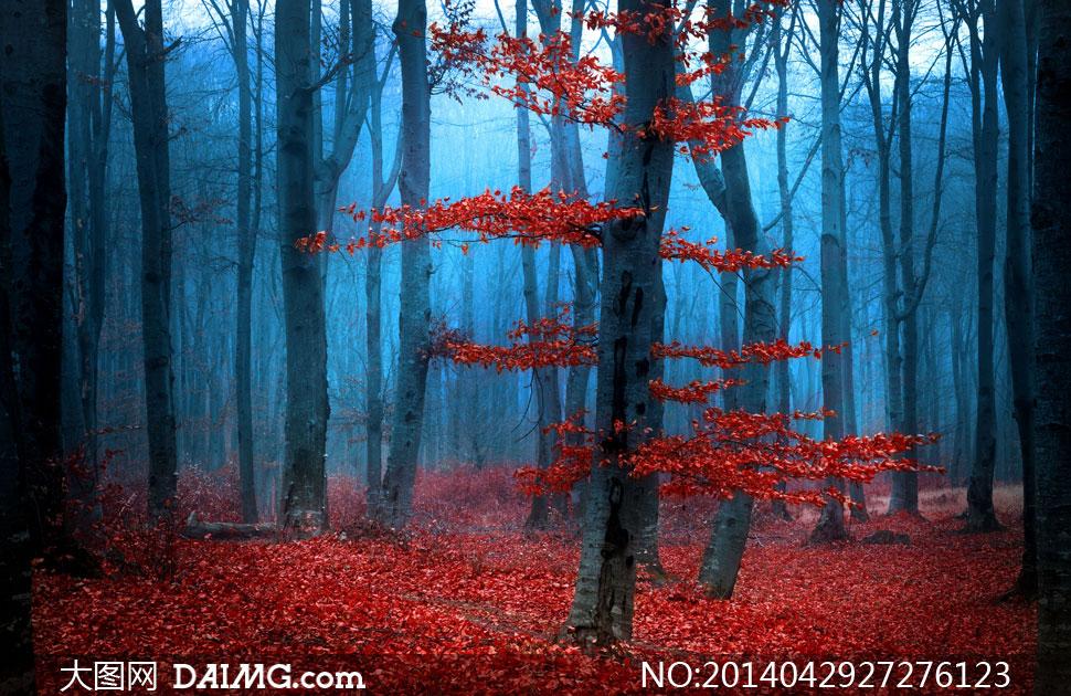 落满红叶子的树林风景摄影高清图片 - 大图网设计素材