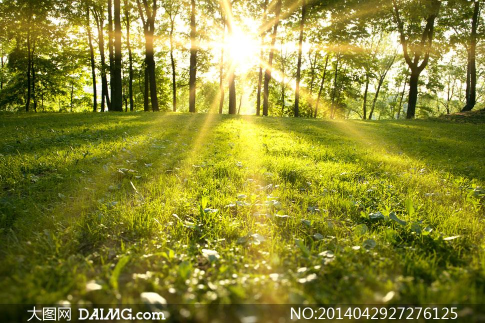 草地树林自然风景逆光摄影高清图片