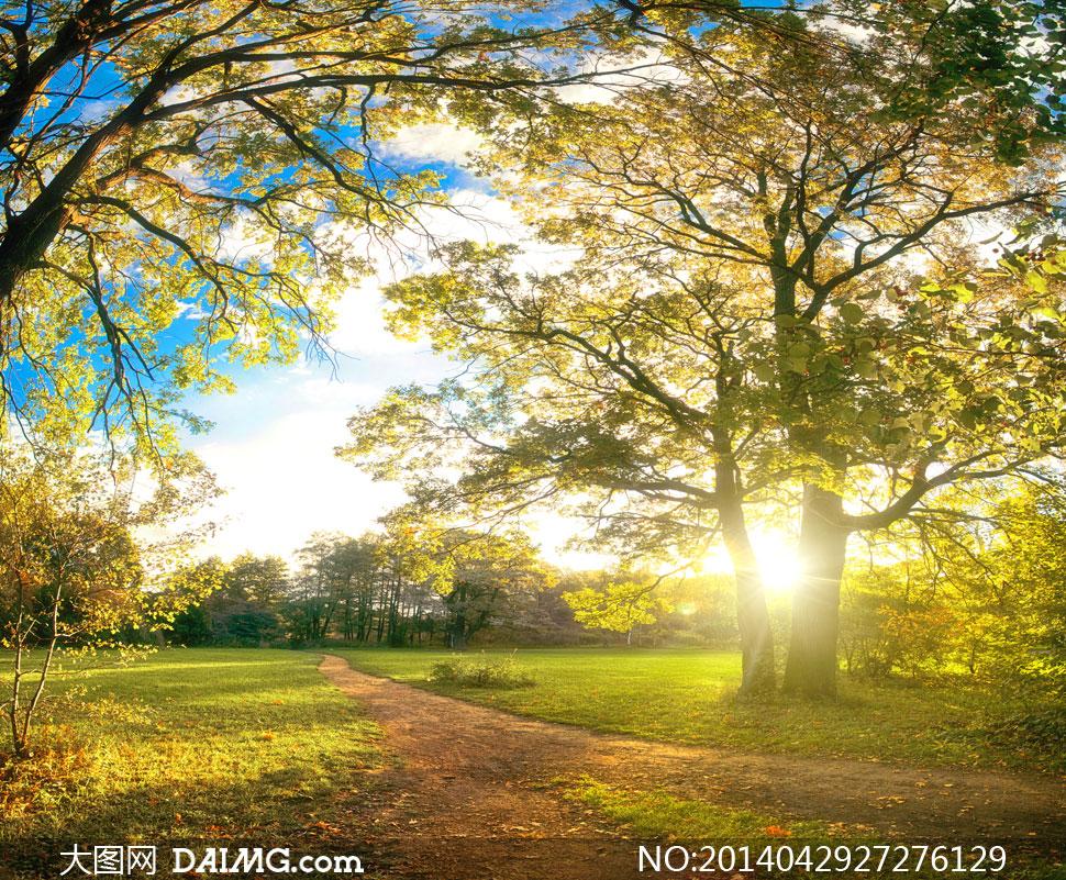 蓝天白云草地树木风光摄影高清图片