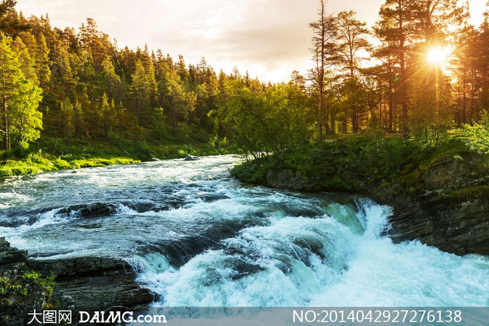树林河流阳光自然风光摄影高清图片