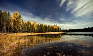 秋季树林中的湖泊摄影图片