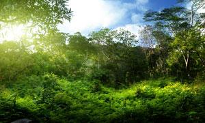 蓝天白云与树林灌木等摄影高清图片