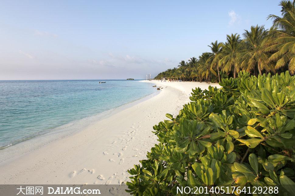 天空夕阳椰树海面风景摄影高清图片 大图网设计
