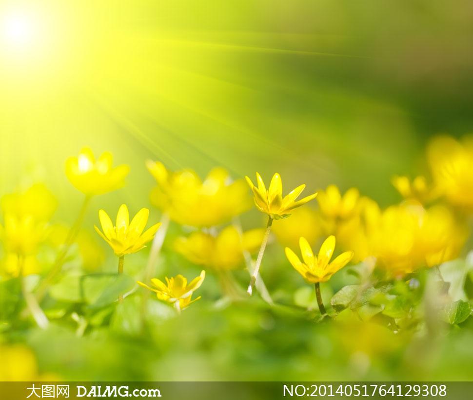 关键词: 高清摄影大图图片素材自然风景风光阳光太阳花朵花卉鲜花植物