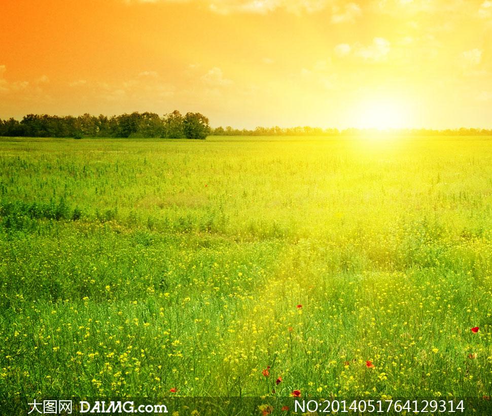关键词: 高清摄影大图图片素材自然风景花朵鲜花花卉植物草地花草阳光
