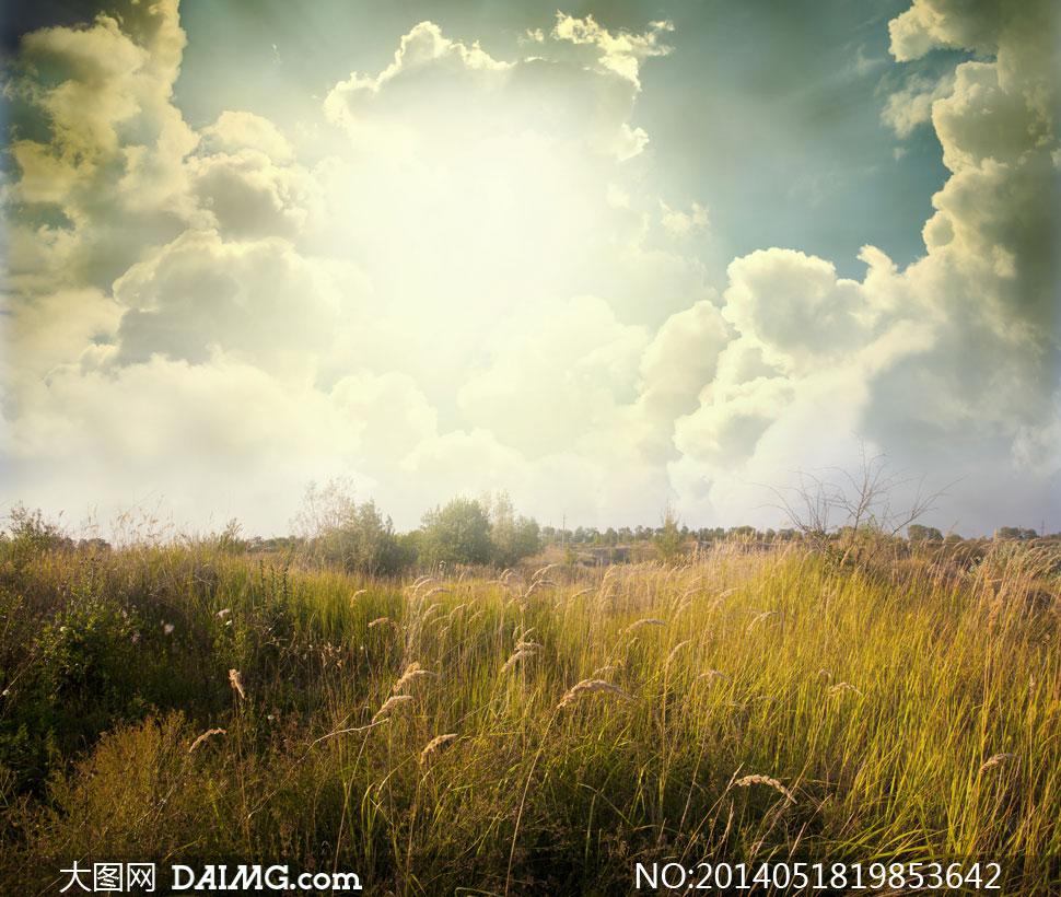 天空白云阳光草丛风景摄影高清图片