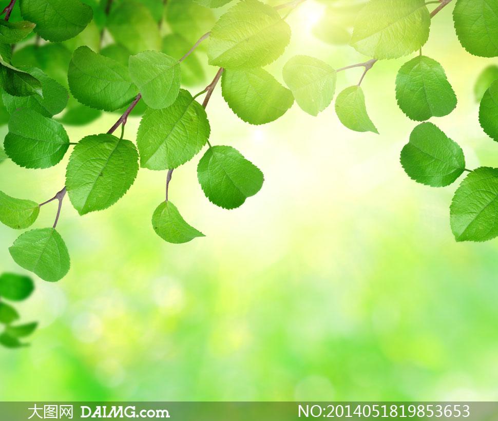 耀眼阳光与绿色树叶等摄影高清图片