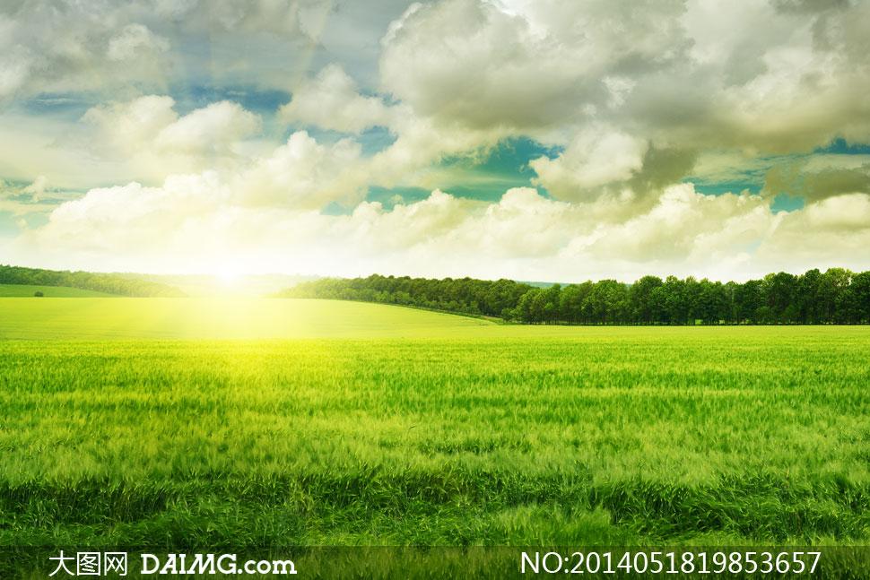 关键词: 高清摄影大图图片素材自然风景树木大树树林树丛阳光光线草地