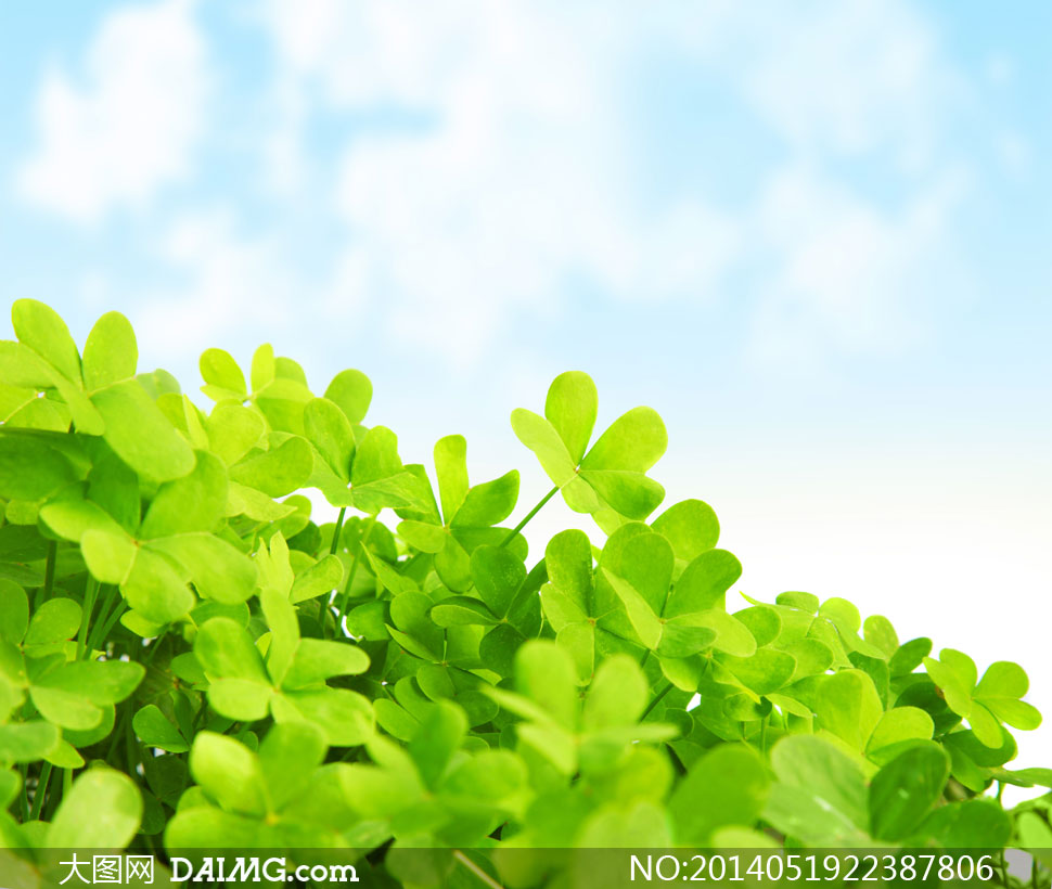 蓝天白云与青青绿叶等摄影高清图片