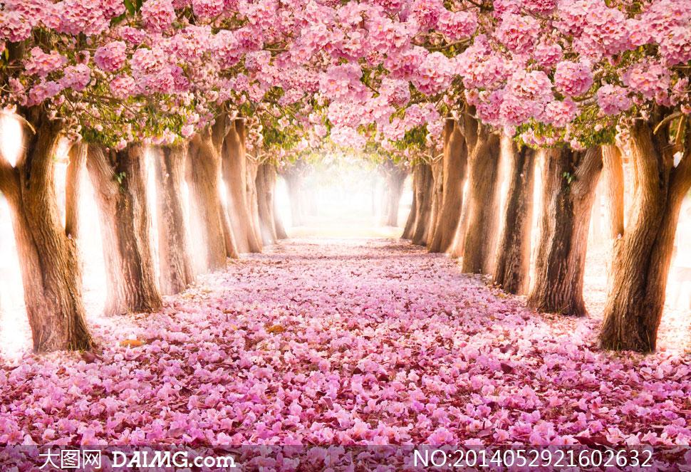 春天落英缤纷树木风景摄影高清图片 - 大图网设计素材