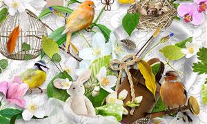 羽毛花朵小鸟与绿叶等欧美剪贴素材