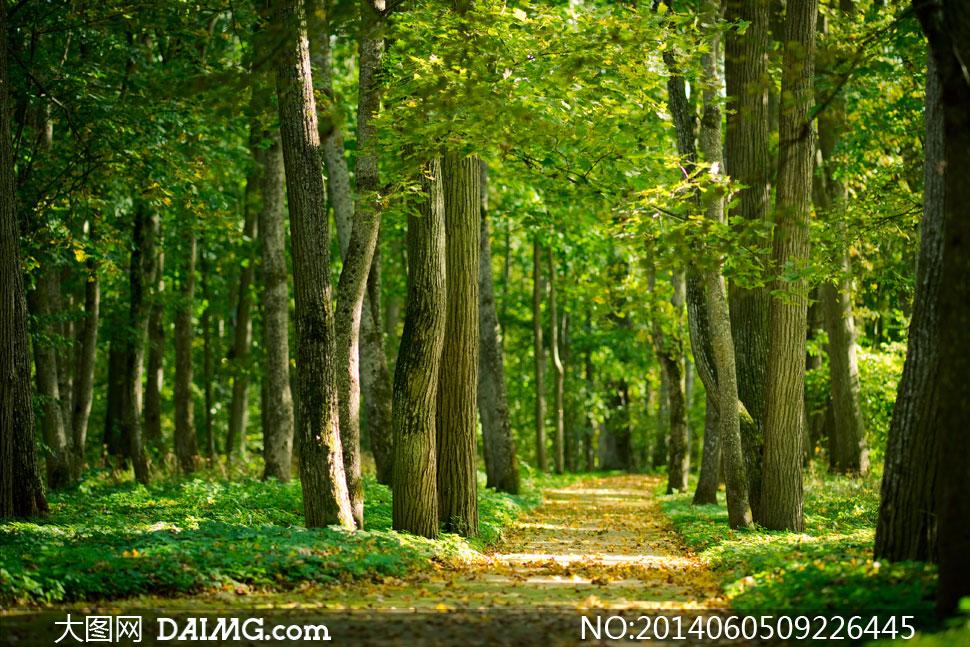 大树落叶草地自然风景摄影图片图片  茂密树林与小路等风光摄影高清图