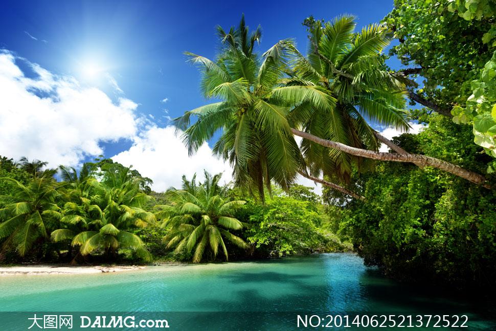 蓝天白云与海湾深处的椰树高清图片