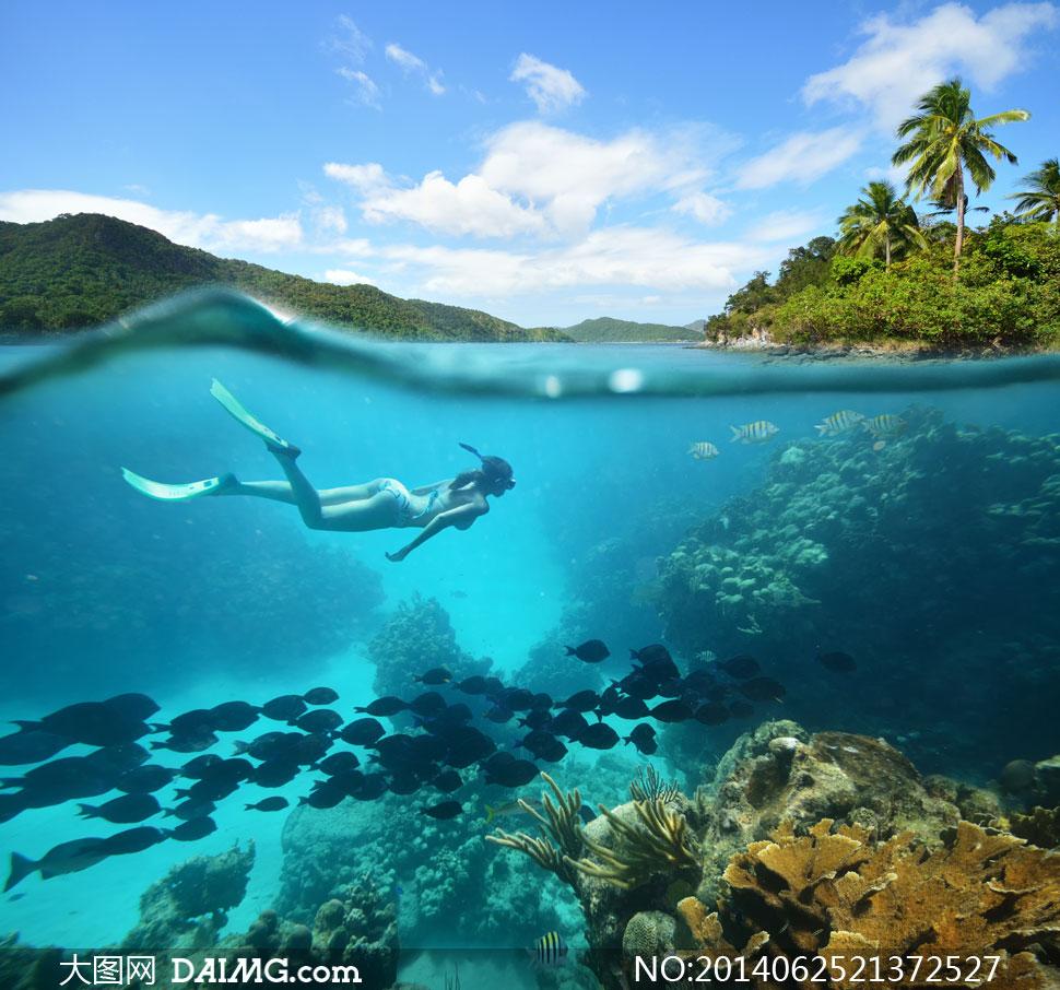 水下鱼群与潜水的美女摄影高清图片