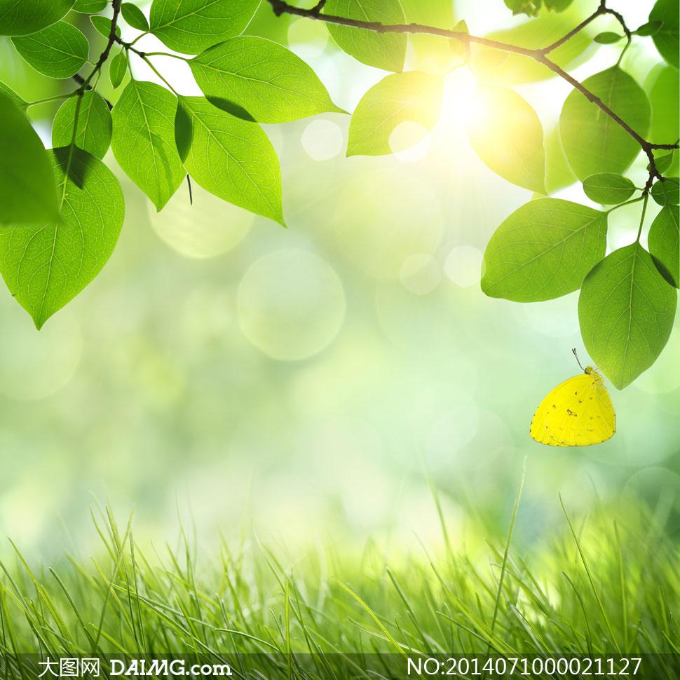 关键词: 绿色树叶绿叶叶子春季绿草蝴蝶草丛树枝枝叶阳光光线光斑唯美