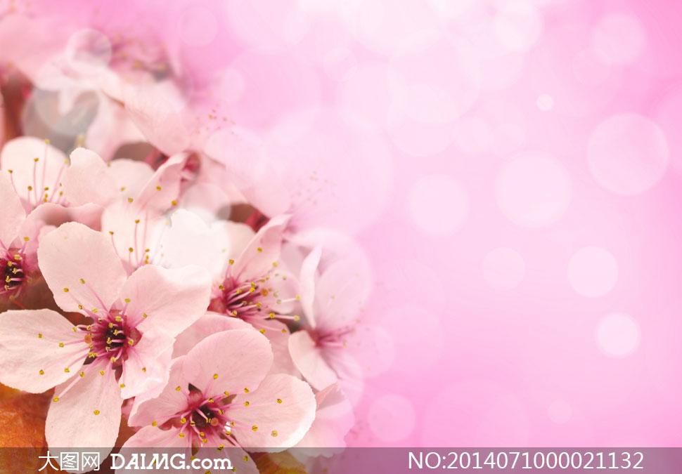 梦幻唯美的粉色桃花摄影图片