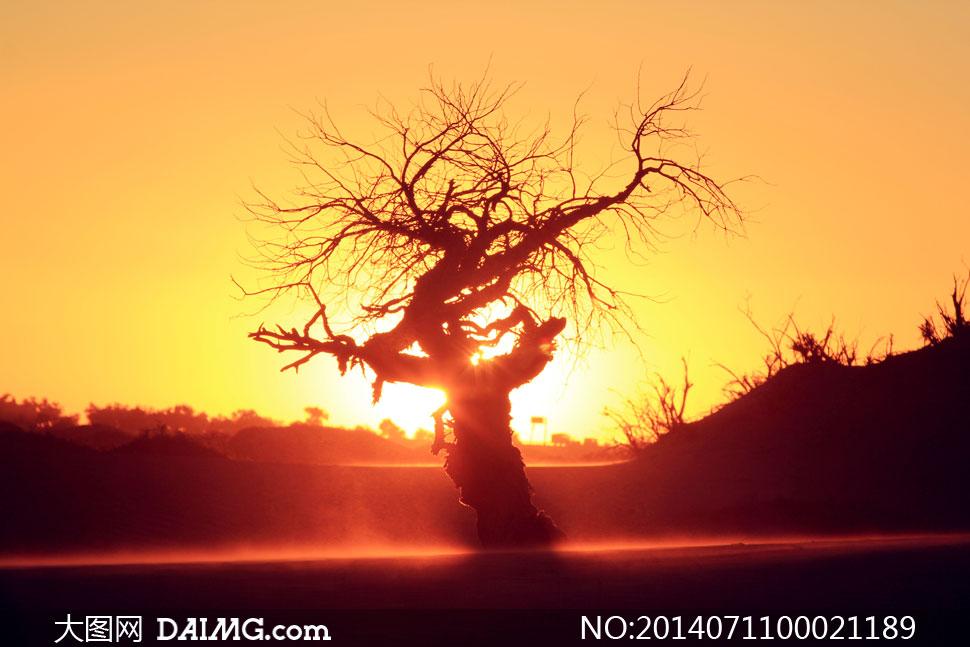 微信头像阳光大自然风景