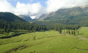 美丽山脚下的羊群摄影图片