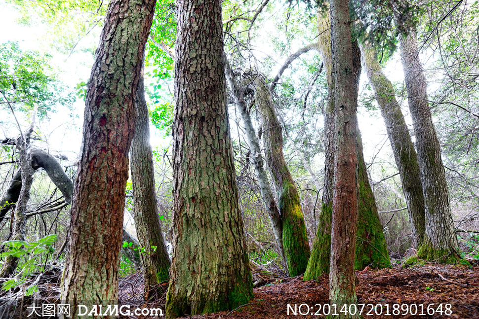 高清摄影大图图片素材自然风景风光树枝大树树木