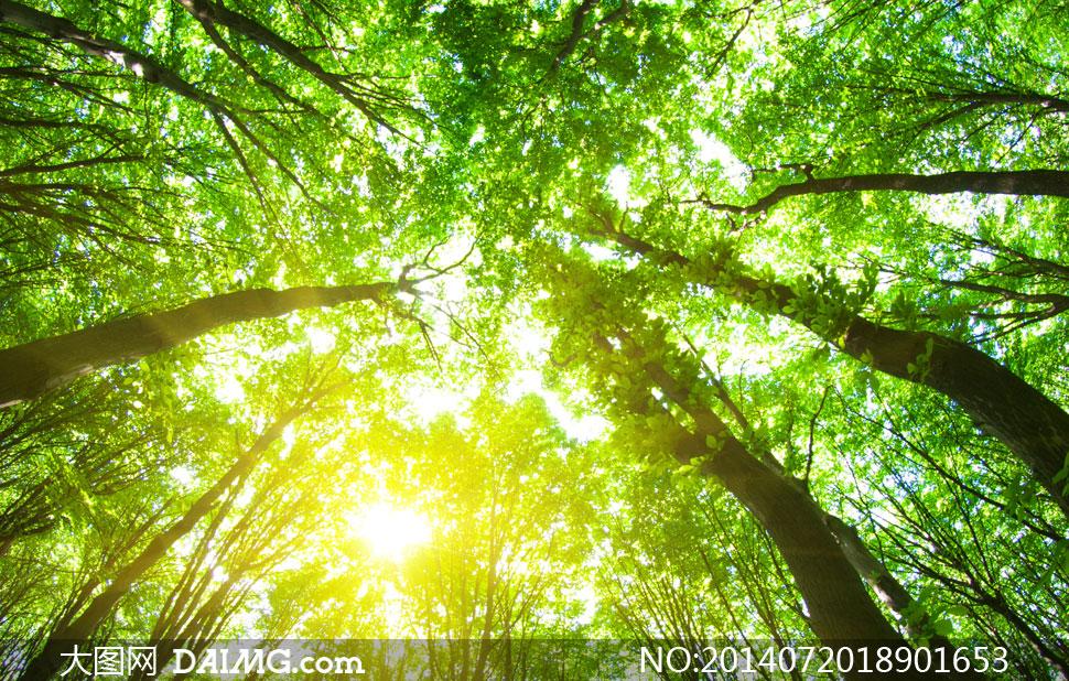 关键词: 高清摄影大图图片素材自然风景风光树木大树绿色葱绿仰视树林