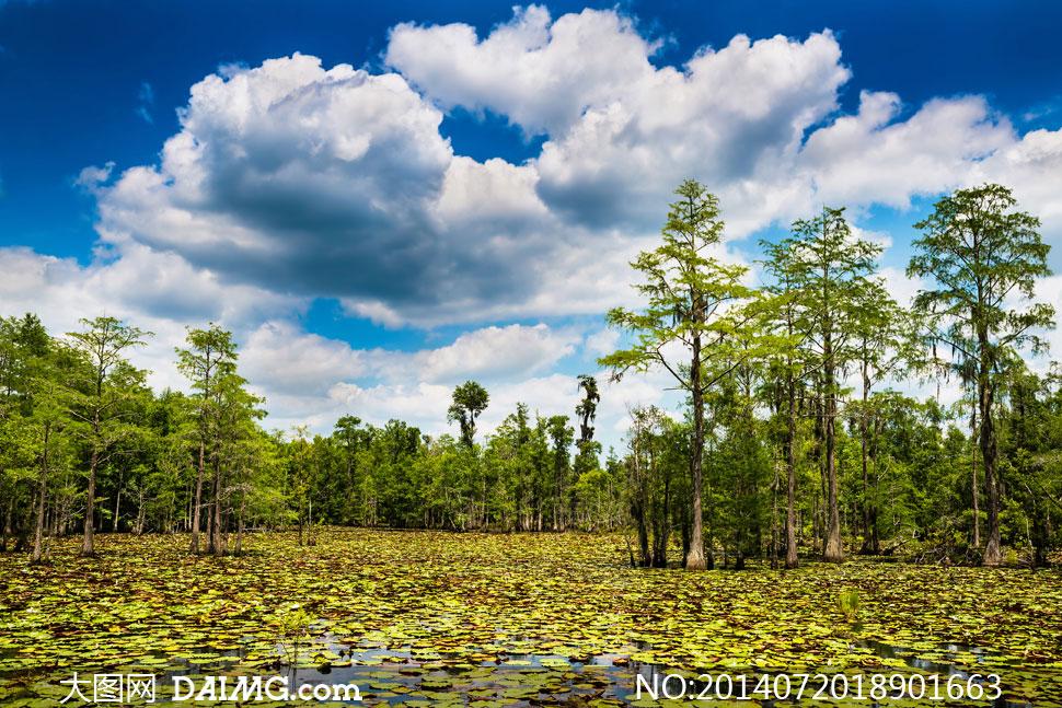 蓝天白云树林自然风光摄影高清图片