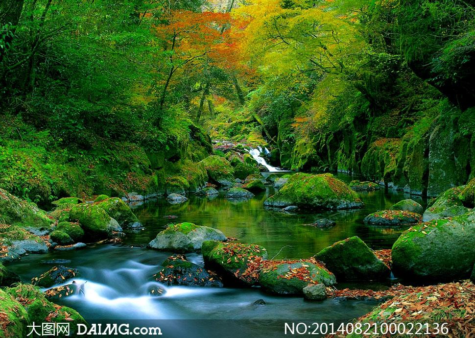 丛林小溪美丽风光摄影图片