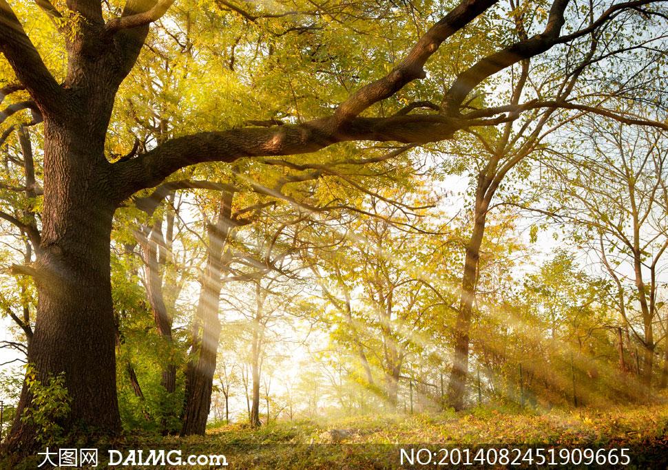 光线与树林落叶等风景摄影高清图片