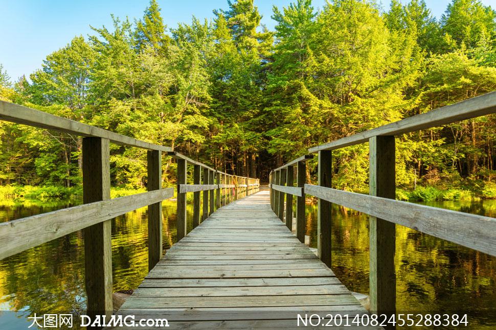 高清摄影大图图片素材自然风光风景大树树木树林茂密茂盛绿树木桥