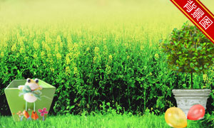 唯美清新草丛草地影楼摄影背景图片