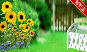 绿叶草地与向日葵影楼摄影背景图片