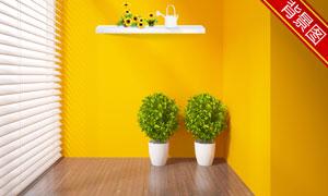 花盆植物与置物架影楼摄影背景图片