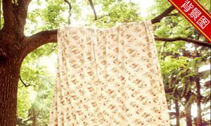 挂在树枝上的布匹影楼摄影背景图片