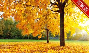 秋天公园风光主题影楼摄影背景图片
