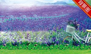 山野紫色鲜花风光影楼摄影背景美高梅