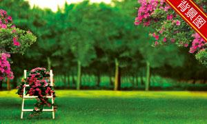 葱绿树木草地风景影楼摄影背景图片