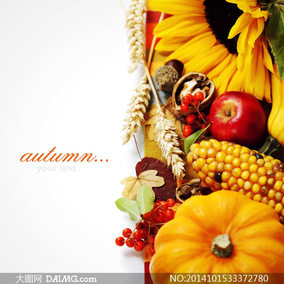 玉米苹果秋天收获主题摄影高清图片 - 大图网设计素材