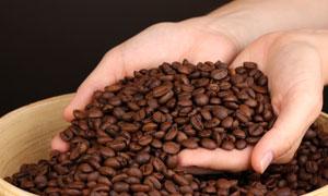 捧在手里的咖啡豆近景摄影高清图片